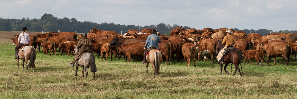 Tour 3: Der Norden – Wo die wilden Cowboys wohnen